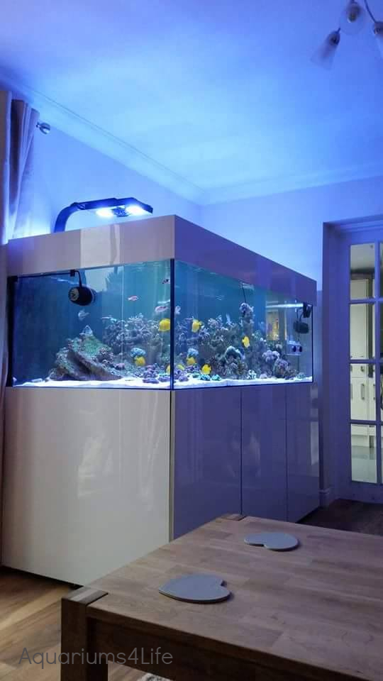 Contemporary Gloss Marine Aquarium and steel framed stand in High Gloss white Matching open pelmet by Aquariums4Life