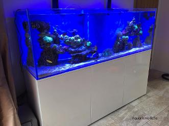Aquariums4Life marine Braceless Aquarium Steel Frame