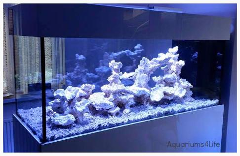 Aquariums4Life Walkround Room Divider aquarium steel frame marine